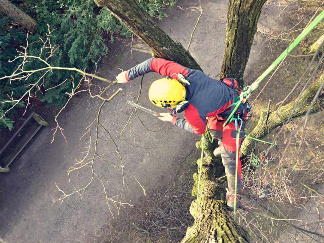 Opilovanie rizikových konárov stromu