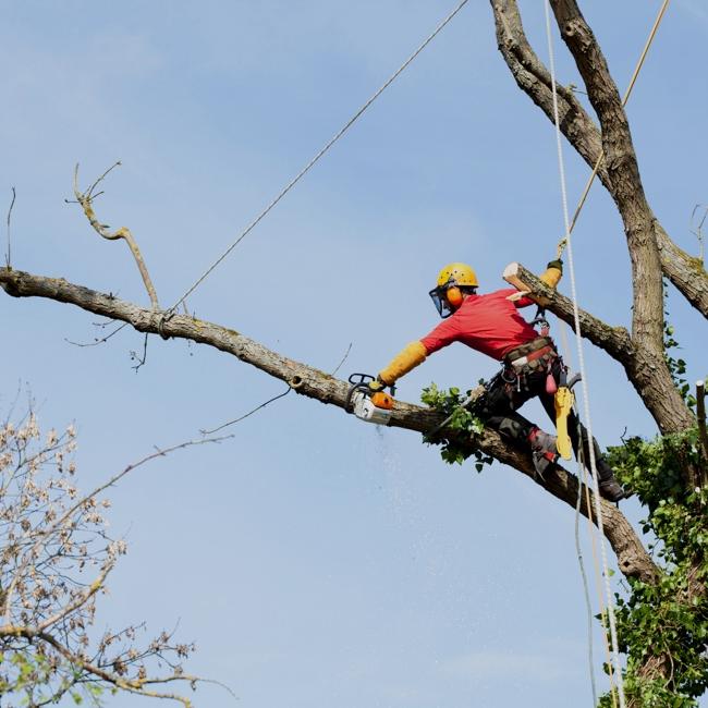 Spilovanie stromov
